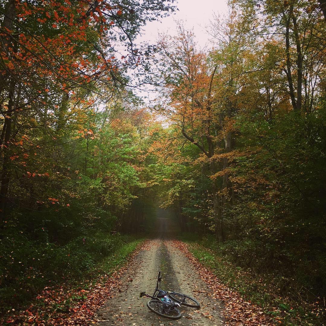 fall_road